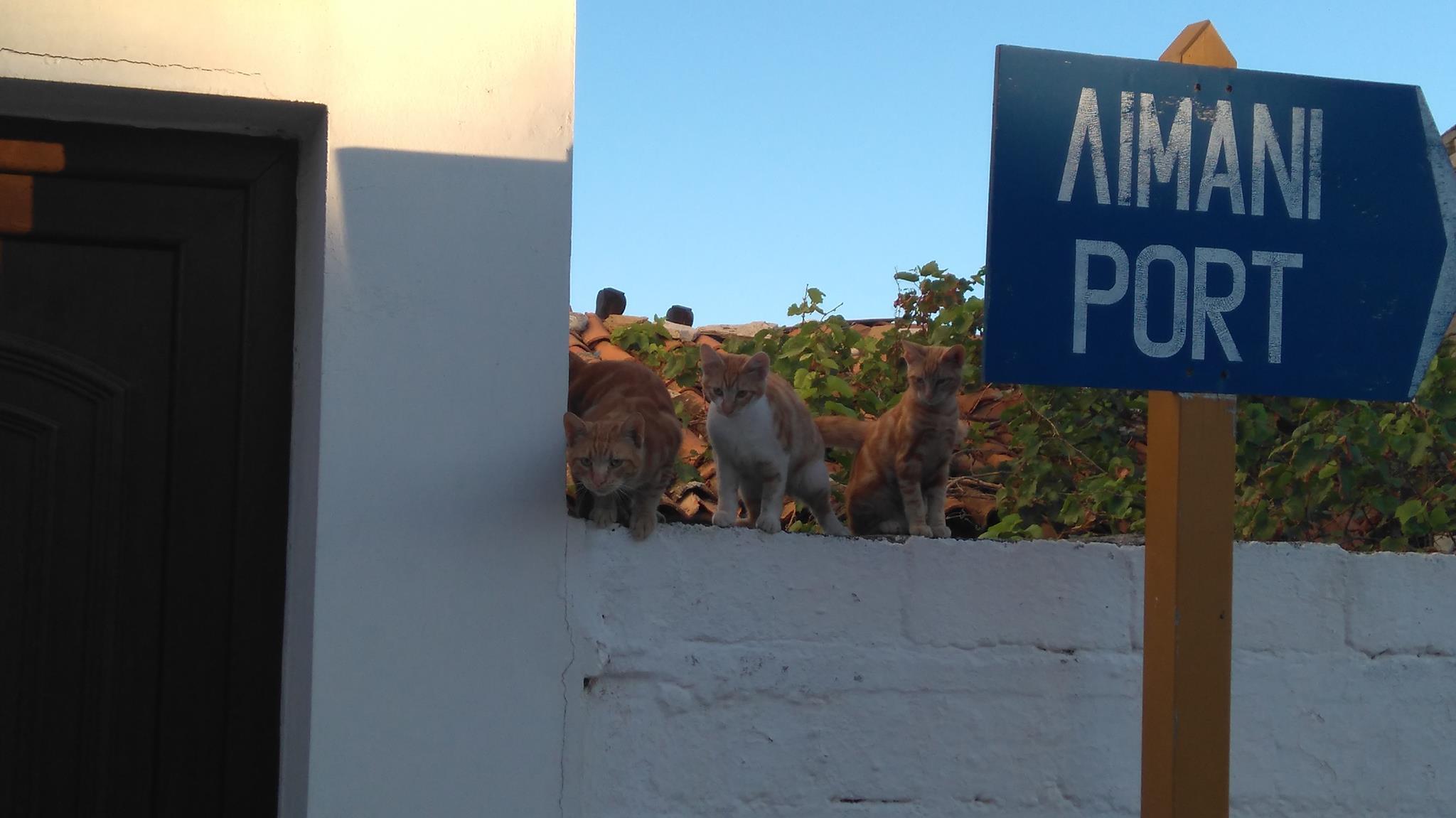 zwerfkatten op Samos